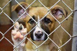 статья за жестокое обращение с животными